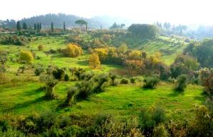 FLORENCE, ITALY / HILLSIDE BEHIND BOBOLI GARDEN