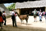 MACHU PICCHU / LLAMA AT THE SACRED ROCK